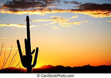 Sunset in the Saguaro Desert - Saguaro Desert Tucson...