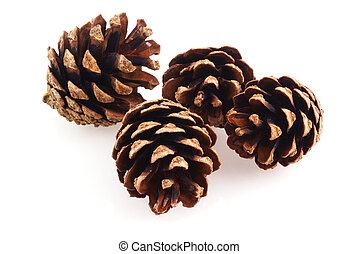 Pine cones. - Couples of cones on a white background....