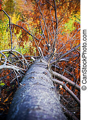 Nature Force - Autumn heart, picture taken at Angrinion park...