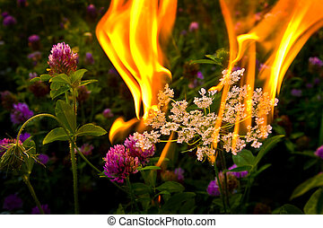 Fire flower - Controlled fire set on flowers that accompined...