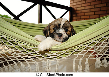 Its a Dogs Life - Cute Puppy in the hammock