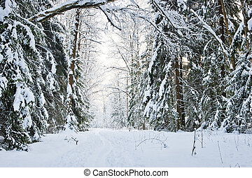 Winter road in a snowy forest