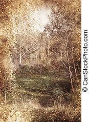 landscape - Texture vintage landscape clearing trees