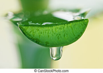 aloe -  aloe juice drop close up