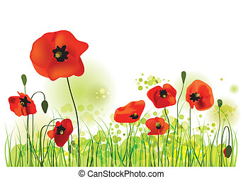 Red Poppies Field, summer landscape, vector illustration