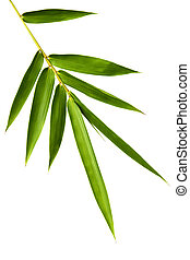 Bamboo Leaves Isolated - Bamboo leaves isolated on white...