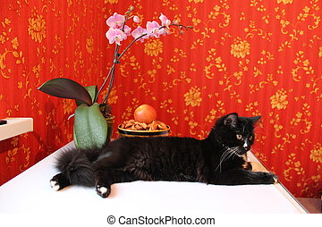 Black cat on background of red wallpaper - Black cat lying...