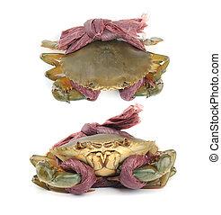 Fresh Raw Crab