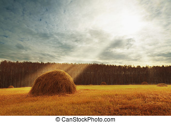 Perfect harvest landscape with straw bales amongst fields -...
