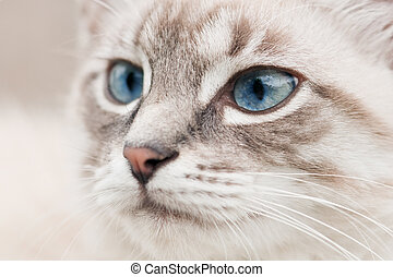 cat head with blue eyes