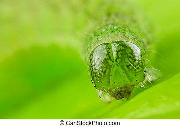 caterpillar - green caterpillar portrait close up