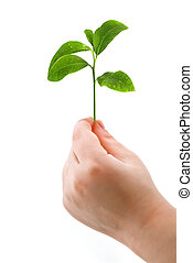 tree - small tree on child hand