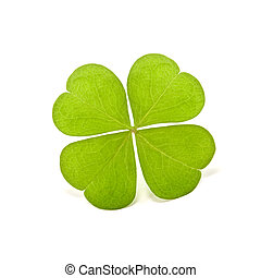 clover - green clover isolated on white
