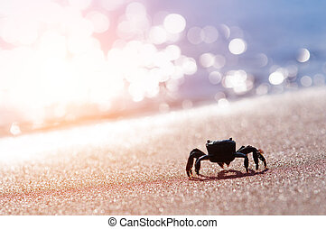 crab - black crab on sand closeup