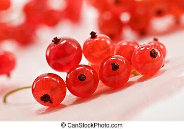 currant - twig of red currant closeup