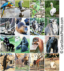 Collage, verschieden, tiere