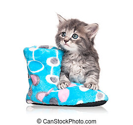 Cute kitten - Cute little kitten with fleece bootee isolated...