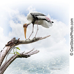 The Painted Stork Mycteria leucocephala Perching