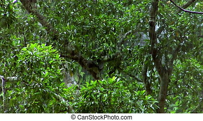 heavy rain forrest close - Heavy rain in green rain forrest...