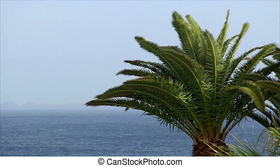 palm and ocean on sunny windy day