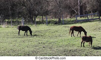 Horse's and a Wild Turkey