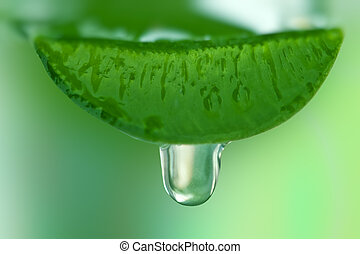aloe juice drop close up