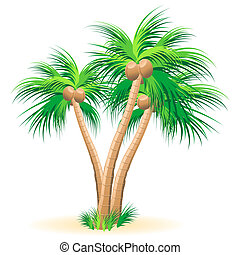 Tropical palm trees illustration on a white background