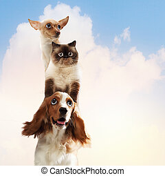 Three home pets next to each other on a light background....