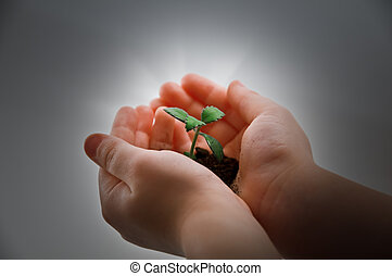 plant - small plant and child hand