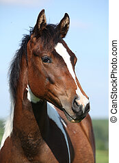 Portrait of beautiful young paint horse mare with blue...