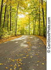 Curving road in fall - with falling leaves