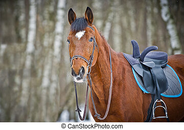 Chestnut sidesaddle horse without her rider in the winter...