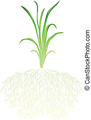 A green grass - Illustration of a green grass on a white...