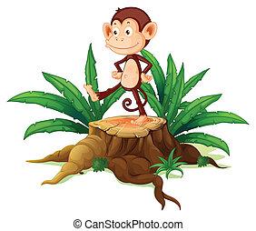 A monkey above a trunk