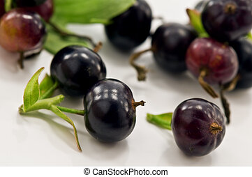 currant - ripe black currant close up