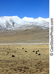 View of Qinghai-Tibet Plateau, included the characteristic...