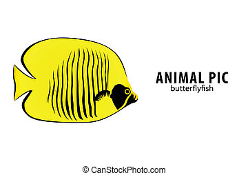 Golden Butterflyfish - golden butterfly fish on white...