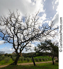 overview of oak - overview of an oak tree in spring in...