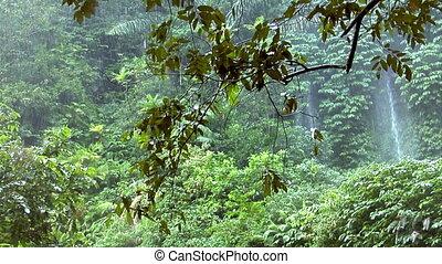 rain forrest waterfall - 10156 rain forrest waterfall