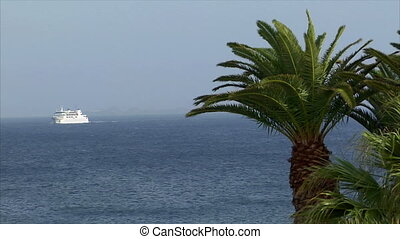 palm with ship in background
