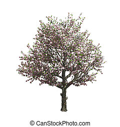 Apple tree isolated Vector illustration