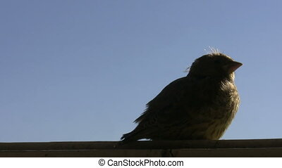 Baby bird in the window - Little baby bird is sitting on a...