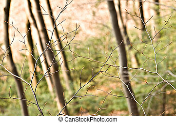 twigs in forest close up