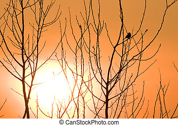 sunset - beautiful sunset and twigs with bird