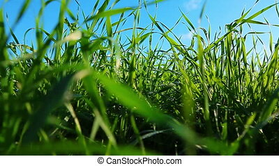green grass dolly shot