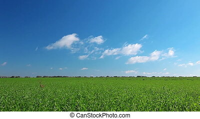 green field and cloudy sky