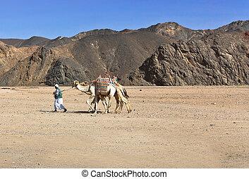 Bedouin with camel in the Sahara desert Egypt