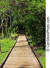 Wooden Walkway - A wooden walkway that leads through the...