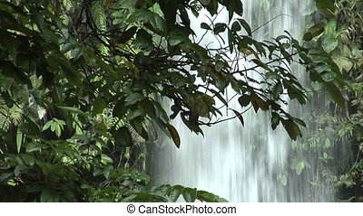 waterfall behind tree 1