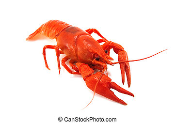 crustacean - red crustacean isolated on white